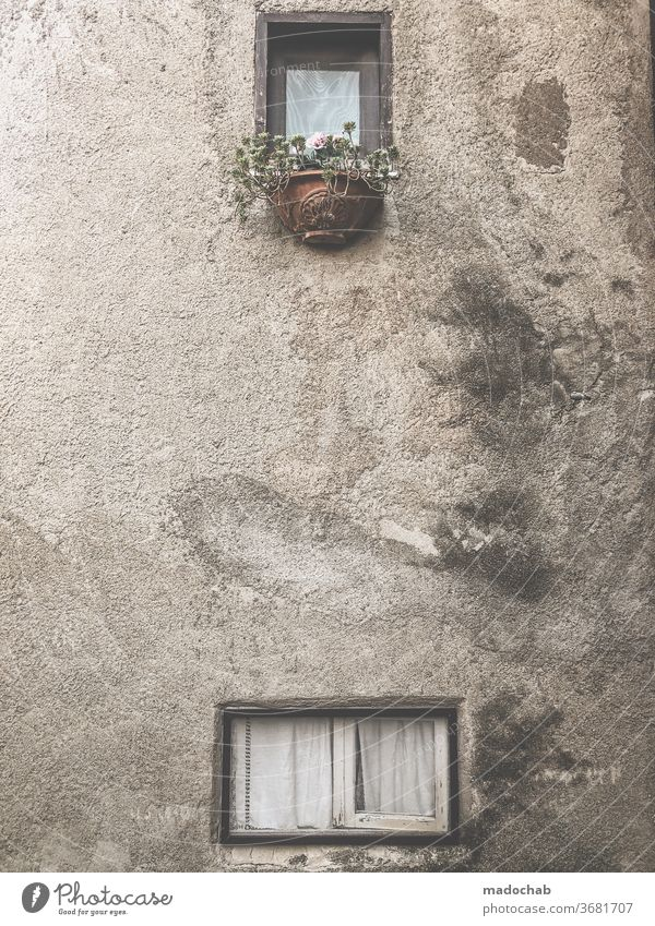 sea of flowers Facade House (Residential Structure) Window Broken Old Gloomy Decline Redecorate Transience Wall (barrier) Ruin Past Destruction built