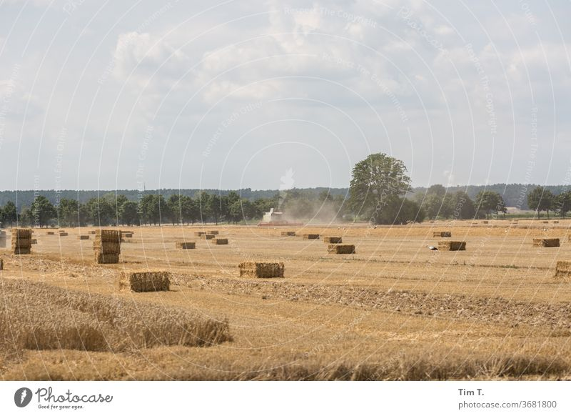 Harvest in the Lausitz Lausitz forest Brandenburg Field Sky Landscape Exterior shot Clouds Nature Deserted Colour photo Environment Beautiful weather Day