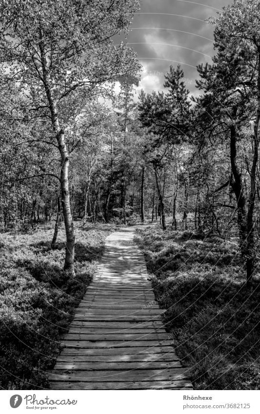 b/w photography black moor, light and shadow Bog Light Shadow boardwalk Bright Exterior shot Landscape Deserted Contrast Forest tree Calm conceit