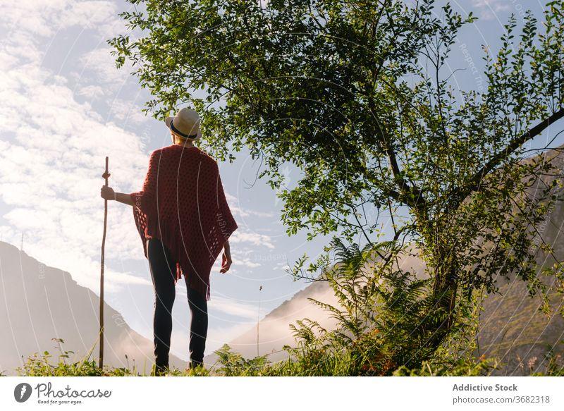 Traveler with wooden stick in highland area traveler mountain morning enjoy sunrise wanderer wanderlust staff landscape freedom peaceful idyllic nature tranquil