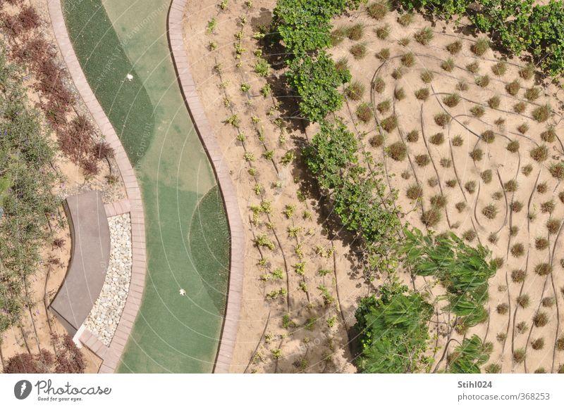 Nature Green Plant Tree Landscape Lanes & trails Gray Garden Brown Park Growth Perspective Bushes Planning Network Desert