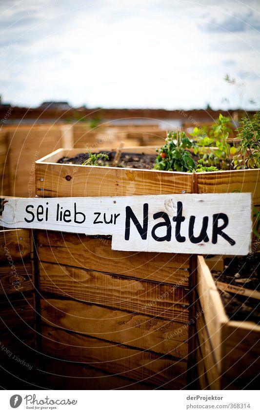 Nature Plant Beautiful Summer Joy Environment Love Emotions Happy Garden Moody Contentment Joie de vivre (Vitality) Beautiful weather Romance Roof