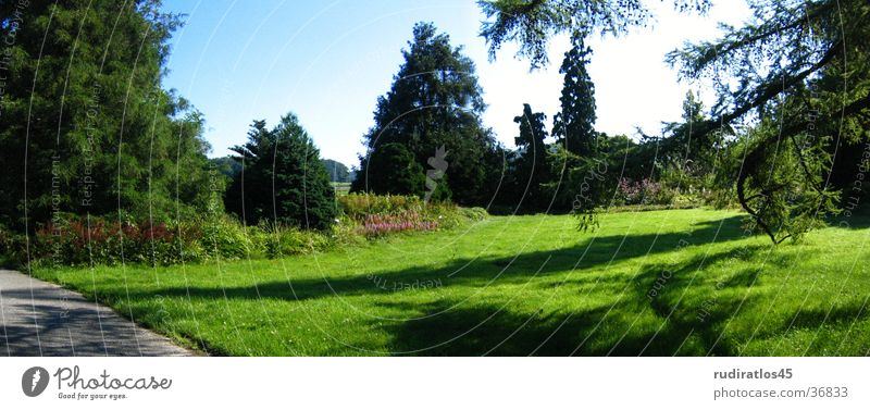 green idyll Green Idyll Tree rasen.grass
