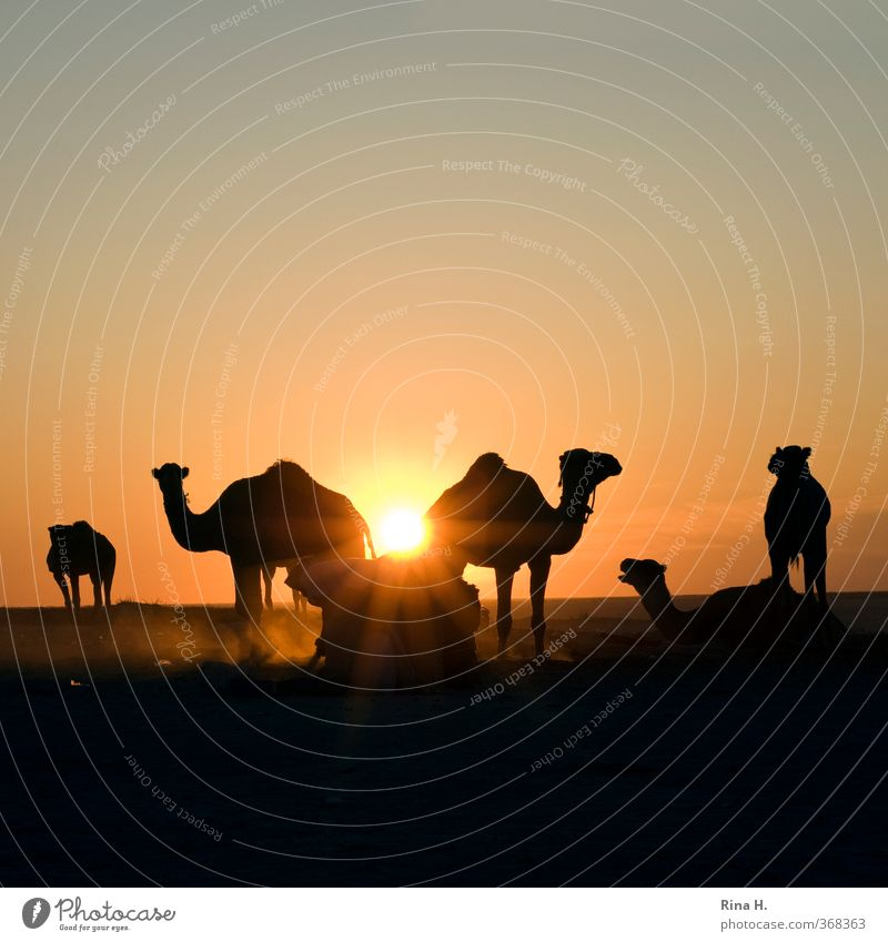 Human being Sky Nature Man Vacation & Travel Calm Animal Adults Far-off places Work and employment Beautiful weather Group of animals Adventure Desert Serene Cloudless sky
