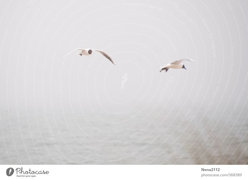 Fly in fog Environment Nature Landscape Animal Air Water Sky Clouds Horizon Bad weather Fog Rain North Sea Baltic Sea Ocean Bird Wing 2 Flying Gray Seagull