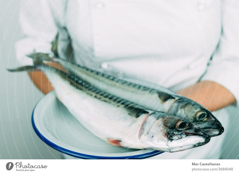 Woman in chef's clothes showing a dish with fresh fish. Kitchen concept. Fresh mackerel on a white plate. hand person professional kitchen natural wildlife