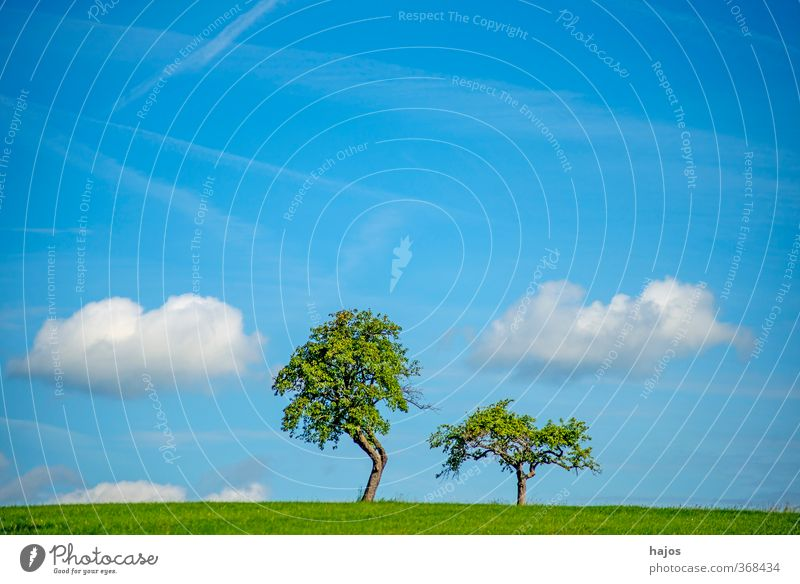 Trees with clouds Calm Meditation Far-off places Freedom Summer Agriculture Forestry Environment Nature Landscape Clouds Meadow Old Blue Green Peaceful Idyll