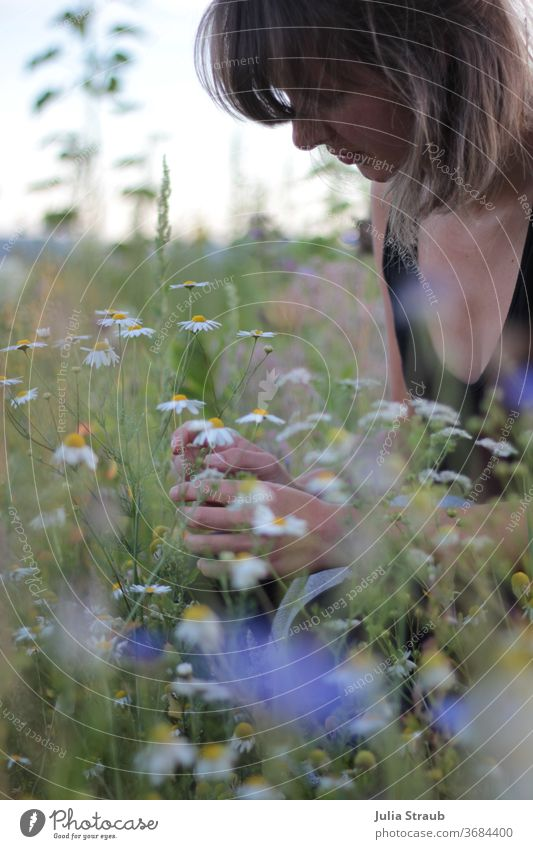 Young woman kneels in the flower field and picks camomile blossoms Woman fringe hairstyle Short haircut Summer Summery Flower meadow flowers wild flowers