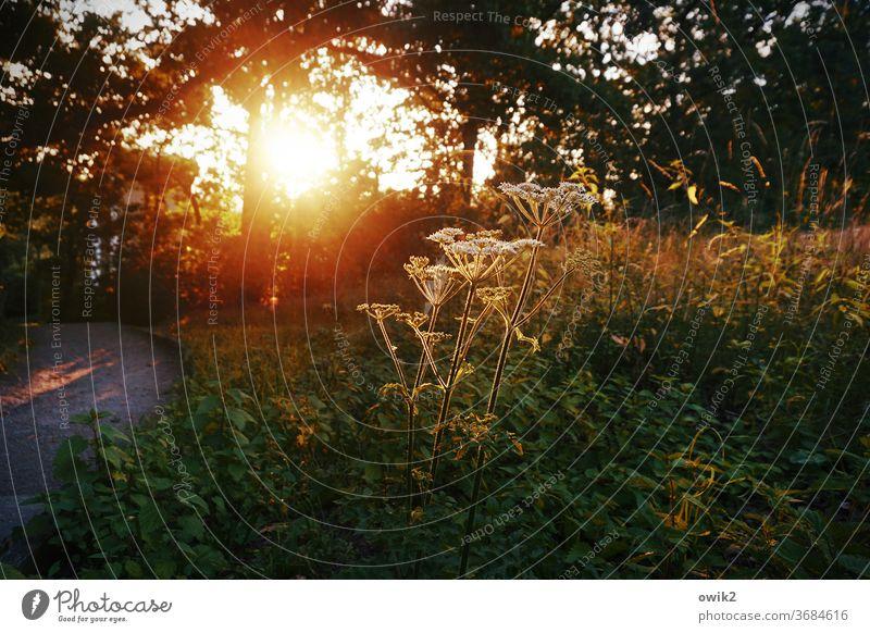 evening salutation Environment Nature Plant Sunlight Day Deserted bushes Wild plant Detail Illuminate Colour photo Exterior shot Close-up Weather