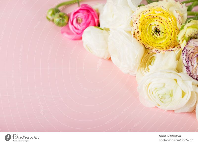 Ranunculus Buttercup Flowers of different colours ranunculus bouquet buttercup flowers pink spring day bunch mothers text blossom nature macro birthday bloom