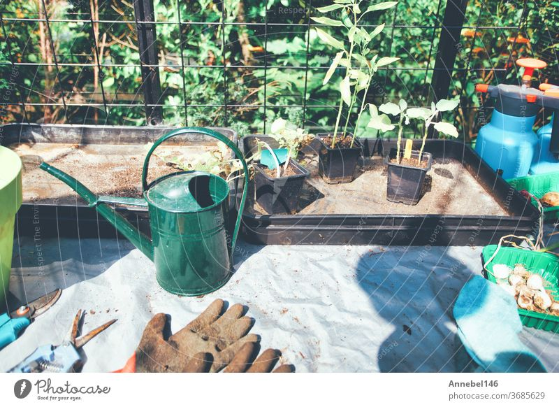 Household goods for the garden. Rubber gloves, flower pots, seedling boxes, Greenhouse in back garden growing plants at home garden stuff spring zucchini