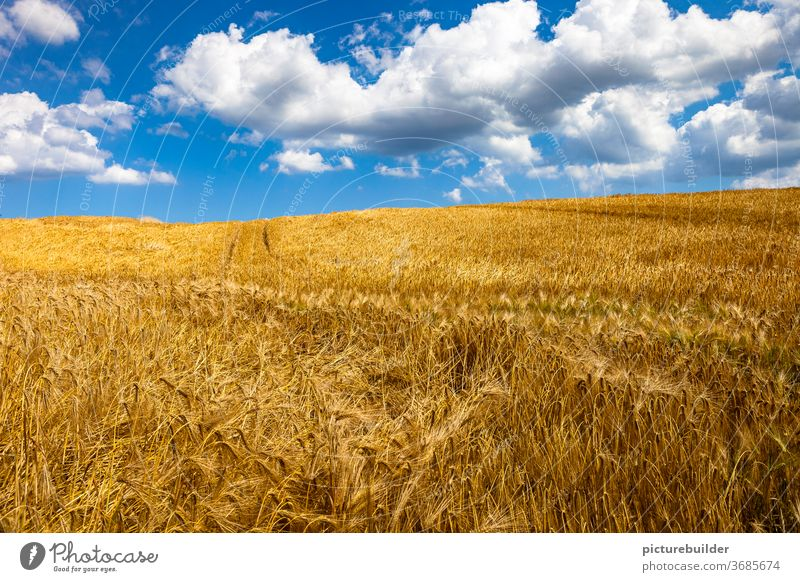 Clouds in the sky above the cornfield Field Grain Sky Grain field harvest season Summer Blue White Yellow Sun Day daylight trace Landscape Agriculture Cornfield