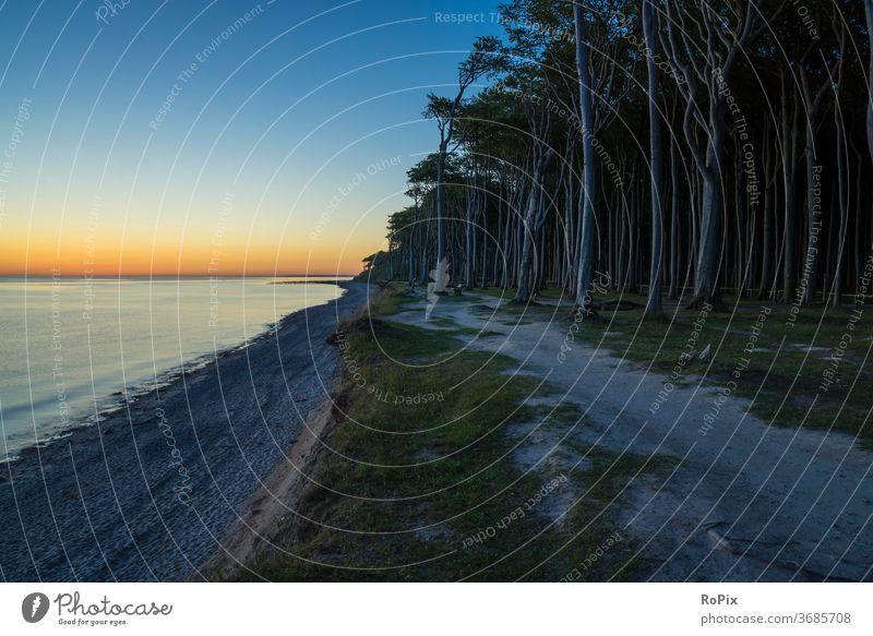 Sunrise in the ghost forest. Forest Wind cripple Beach beach Coast Ocean Sandy beach seashells Baltic Sea ocean vacation Nienhagen coastal migration Relaxation