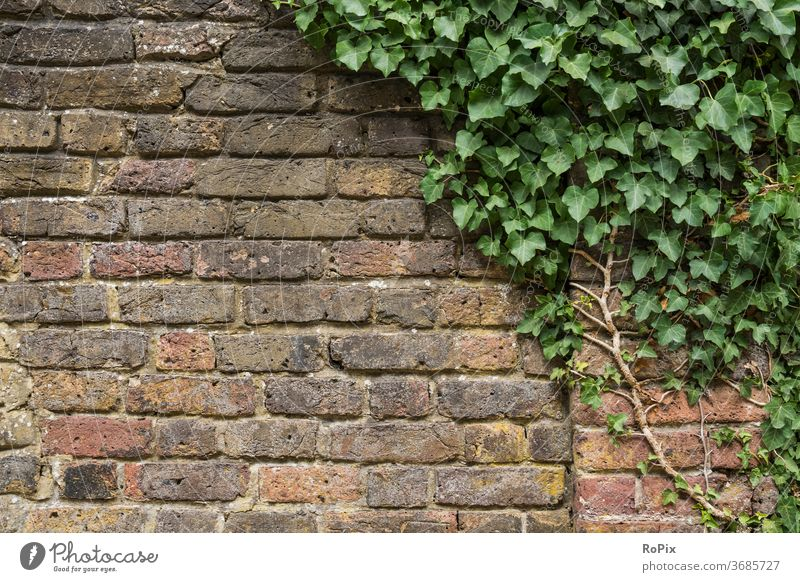 Brick wall with ivy. masonry Ivy plants Weathered Stone Natural stone Stone wall Wall (building) rampart Manmade structures Architecture texture