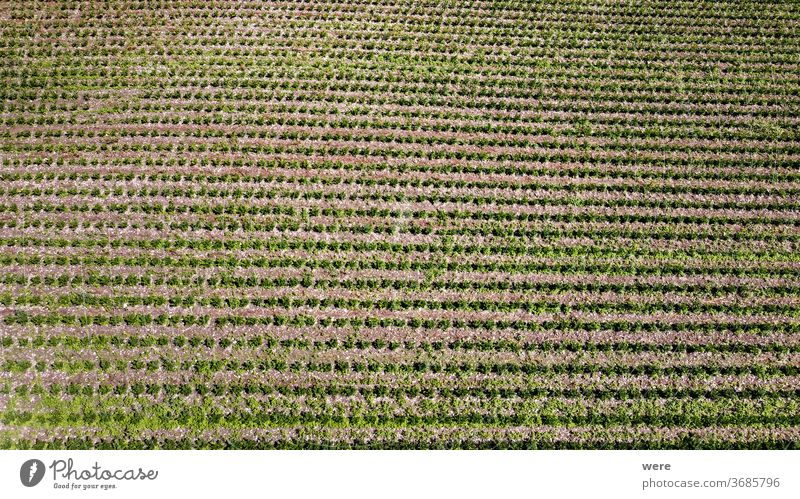Fields with vegetable plants from above Area flight aerial view bird's eye view cook cook vegetarian cooking copy space drone flight end of season farmer
