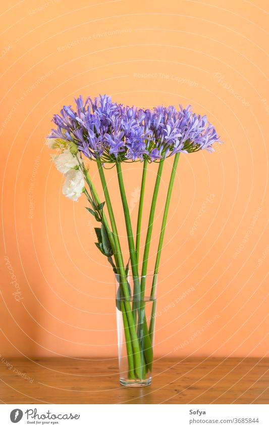 Blue agapanthus bouquet in vase on orange lily nile blue flower design fashion mother minimal floral background purple home transparent decor cantaloupe bright