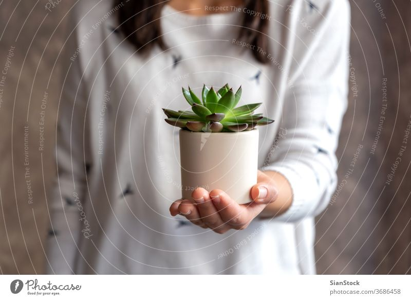 Woman holding succulent plant pot flower woman hands florist gift floral white show indoor Succulent. background person female bloom botanical flowers green