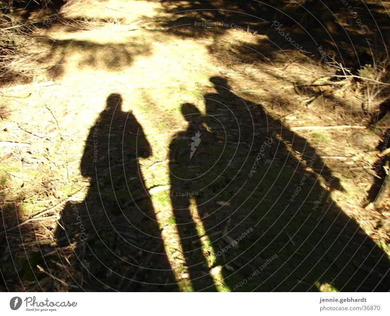 Shadows in the forest Hiking Friendship Woodground To go for a walk Group Sun Nature Human being