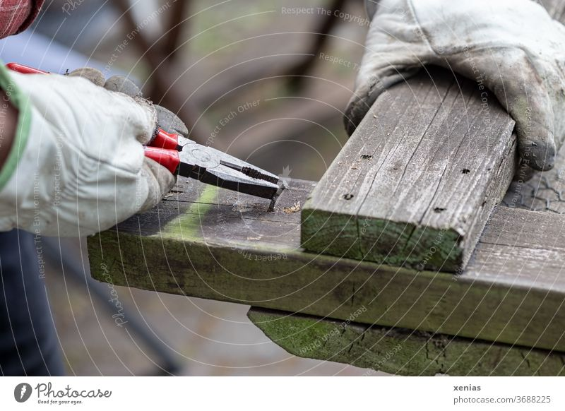 Do-it-yourselfers pull old nail with pliers from weathered wood nails Pair of pliers by hand glove To hold on Work gloves Nail clippers Man Handyman Old repair
