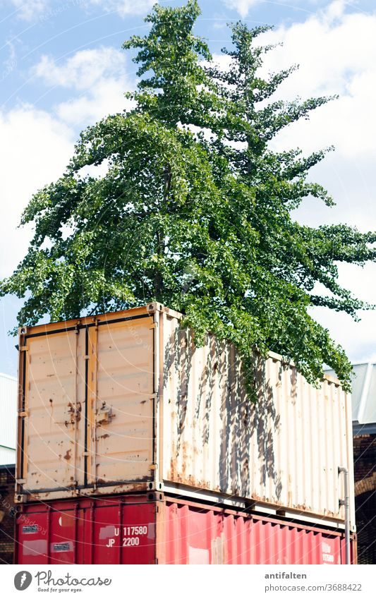 uncontrolled growth Container tree street style Nature Wild Town Exterior shot Colour photo Deserted Day Environment Plant natural Landscape Climate Sky Clouds