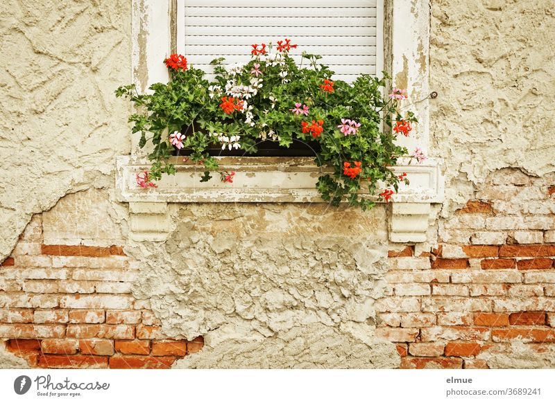 The facade of the old house is crumbling but the flower box is lovingly maintained. Facade Brick building dwell Window box flowers crumble bailer dilapidated
