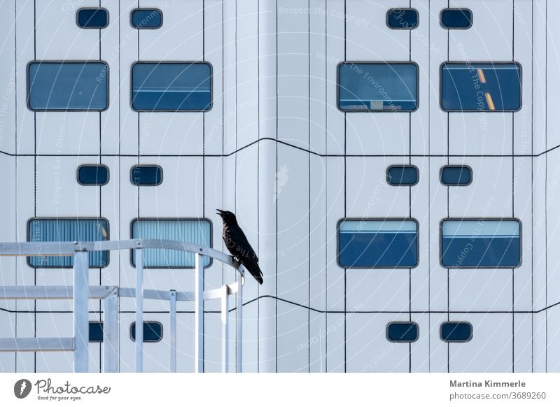 Bird Crow in front of modern architecture Architecture Animal Icon Hospital Modern raven raben Black symbol birds