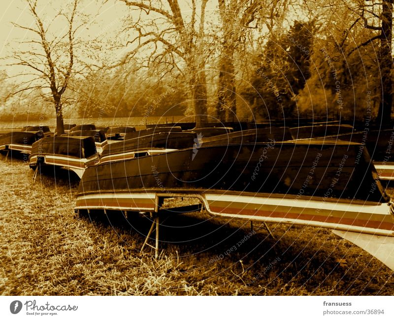 boats Wörlitzer Park Tree Boats. sepia Frost