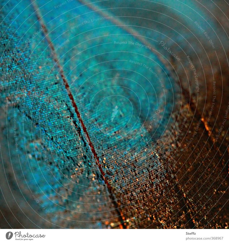 living creature Nature Animal Butterfly Wing blue butterfly Living thing morphoid age Noble butterfly Browns eye stains Esthetic Natural Blue Design Uniqueness