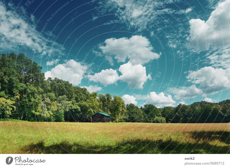 peripheral zone Environment Nature Landscape Panorama (View) Copy Space top Sky Clouds Horizon Edge of the forest Beautiful weather tree Idyll Summer Grass