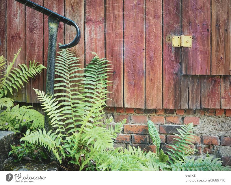 Fern on the way Environment Nature Landscape Plant Colour photo Exterior shot bushes Deserted Pteridopsida Beautiful weather Idyll Close-up Day Growth