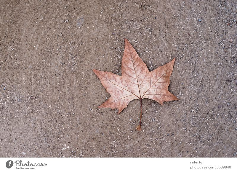 A lonely dry leaf on the ground background foliage autumn pattern season concept park nature fall abstract 1 environment yellow road plant seasonal close