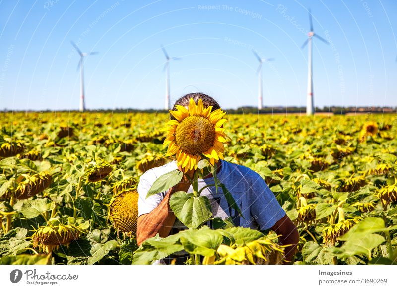 Anonymity. Summer landscape against a light blue sky. Man standing in a yellow field of sunflowers with the yellow head of the sunflower covering his face. Wind turbines background