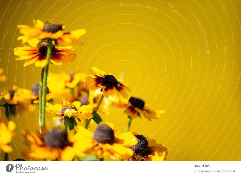 yellow flowers against a yellow background bleed floral splendour spring Copy Space Copy Space top Neutral Background Placeholder already atmospheric Emotions