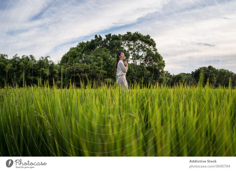 Asian woman in green field in summer rice lush enjoy weekend nature serene rest female ethnic asian tranquil relax calm peaceful stand harmony fresh lady