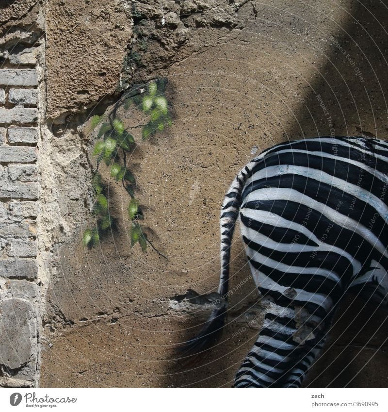 ARSCH Graffiti street art Wall (barrier) Art Street art Mural painting Zebra Facade Animal