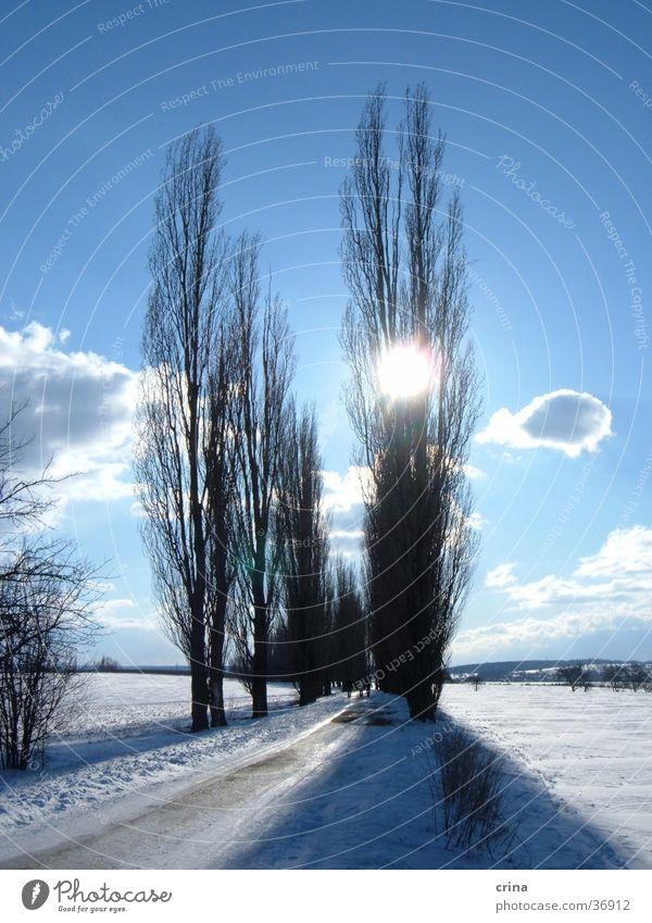 Sunday walk2 Tree Avenue Back-light Clouds White Snow Sky Blue