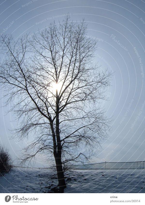 winter's day Winter Tree Back-light Snow Sun Sky Blue