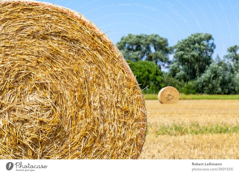a field with lots of straw bales, with a blue sky Agra agriculture background day dried dry farm golden grain harvest hay hay bale landscape meadow rural straws
