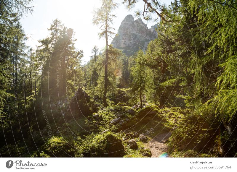 Magic forest in the Gegenlich at the Achensee Forest Nature Nature reserve Effort Environment Brave Beginning Mountain Hiking Colour photo Copy Space right