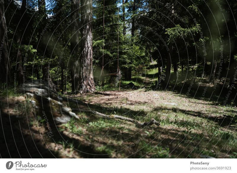 Swings in the forest Forest Clearing woodland playground Green fir forest Switzerland valais Woodground Brown