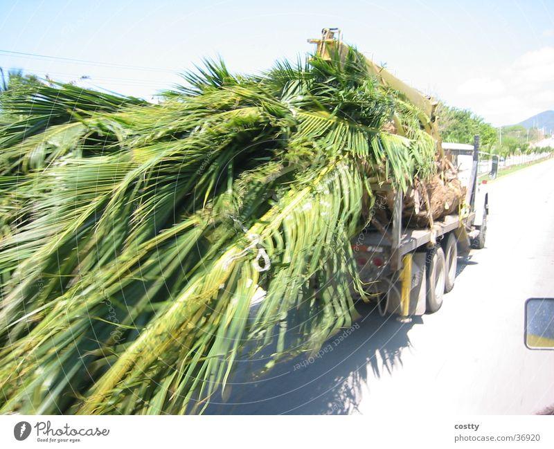 Mexico Nature tree car landscape