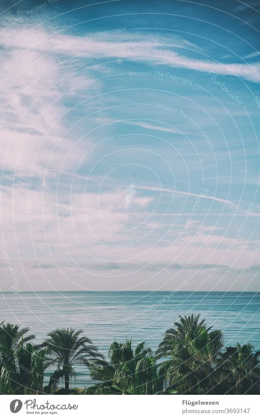 Palms de Mallorca Majorca Ballermann Palma de Majorca el arenal Palm frond Palm beach palms Palm roof Ocean Mediterranean sea Sky tranquillity