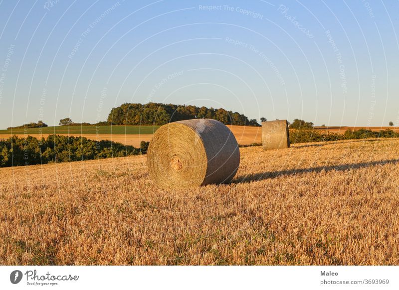 Hay bales on an agricultural field. Rural nature on the farm hay agriculture crop rural landscape harvest straw sky summer golden countryside wheat beauty