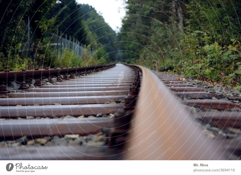 Railway line through the forest Railroad tie railway line Rail transport rails Railroad tracks Transport Traffic infrastructure Means of transport Train travel