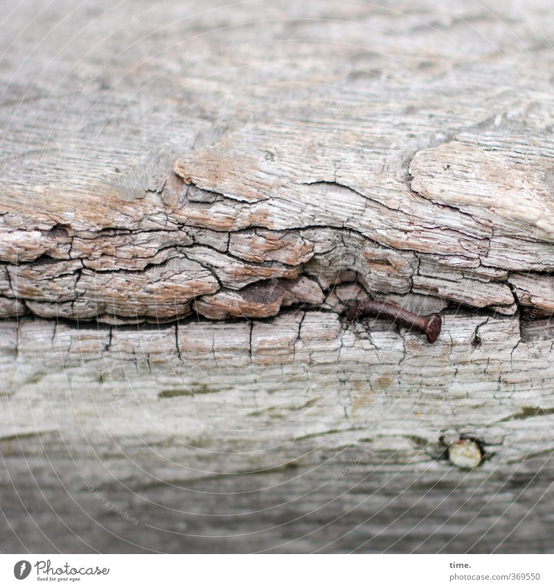 weather-sensitive Wreck Plank Maritime Nail Wood Metal Old Historic Broken Trashy Discover Mysterious Uniqueness Naked Nostalgia Decline Past Transience Lose