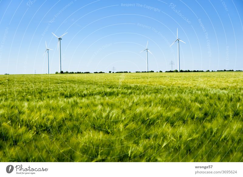 4 wind turbines behind a green cornfield Wind turbines windmills Renewable energy green energy Horizon Blue sky Cloudless sky Grain field Cornfield Rye field