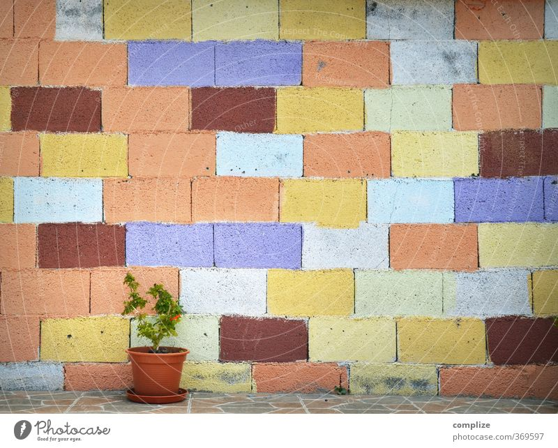 Colourful wall with flower pot Vacation & Travel Living or residing Flat (apartment) House (Residential Structure) Dream house Garden Life Subculture Plant