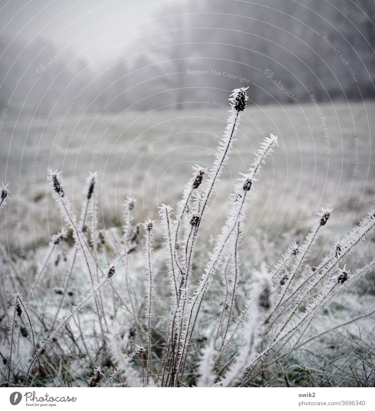 Cold straws Bizarre Pattern ice crystals Freeze Fog Sky Day Copy Space top bushes Landscape Snow Frozen Structures and shapes Subdued colour Close-up Nature