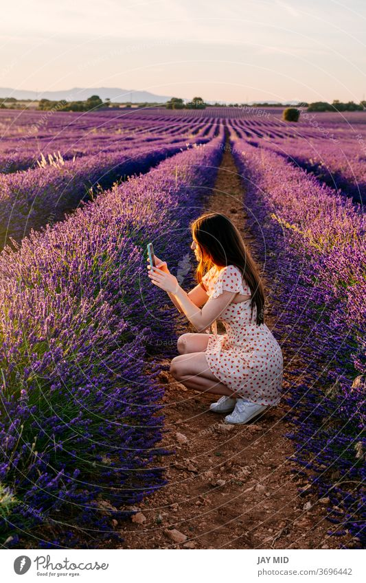 Woman in nature taking pictures of flowers during vacation. woman selfie phone summer field happy beautiful countryside traveller female lavender portrait