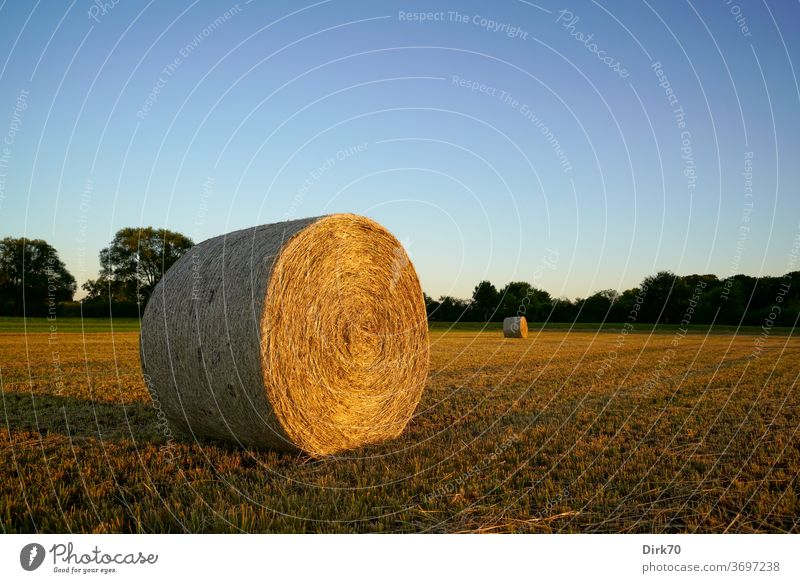 hay bales Hay Hay bale mowing Reap mown Meadow cuttings Cloudless sky Evening evening light Sunlight Landscape Grass Agriculture Exterior shot Summer